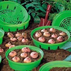 Coș de plantat bulbi 23 cm