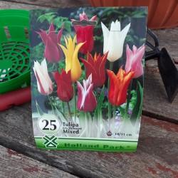 Lalele Liliflowered Mix 25buc.