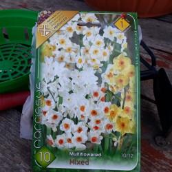 Narcise Multiflowered Mix 10buc.