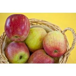 Măr Florina cu ghiveci