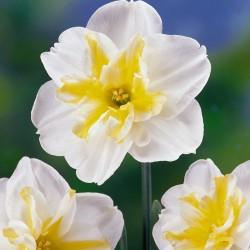 Narcise Lemon Beauty